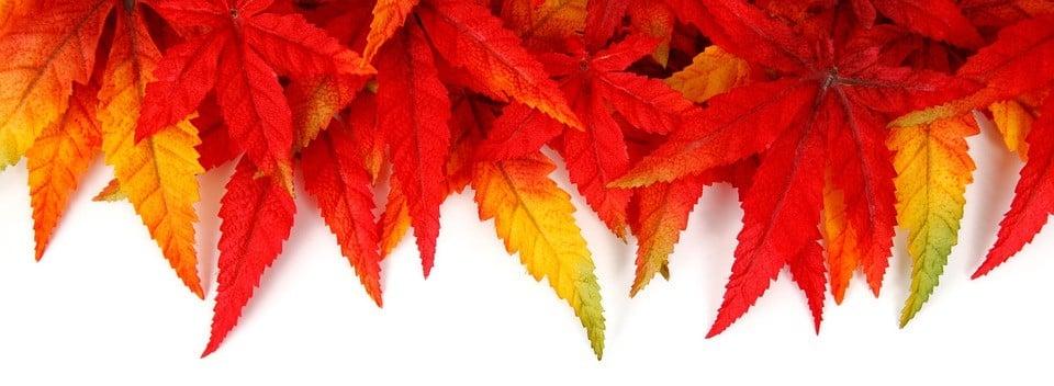 Outdoor Fall Decorations Lake Washington Windows